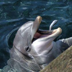 Visje voor een Dolfijn