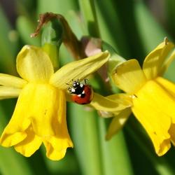 voorjaar!!!!!