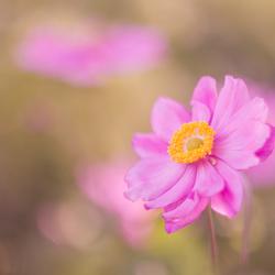 Mooi roze...