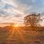 Brunssummerheide schaapskudde tijdens de zonsopkomst