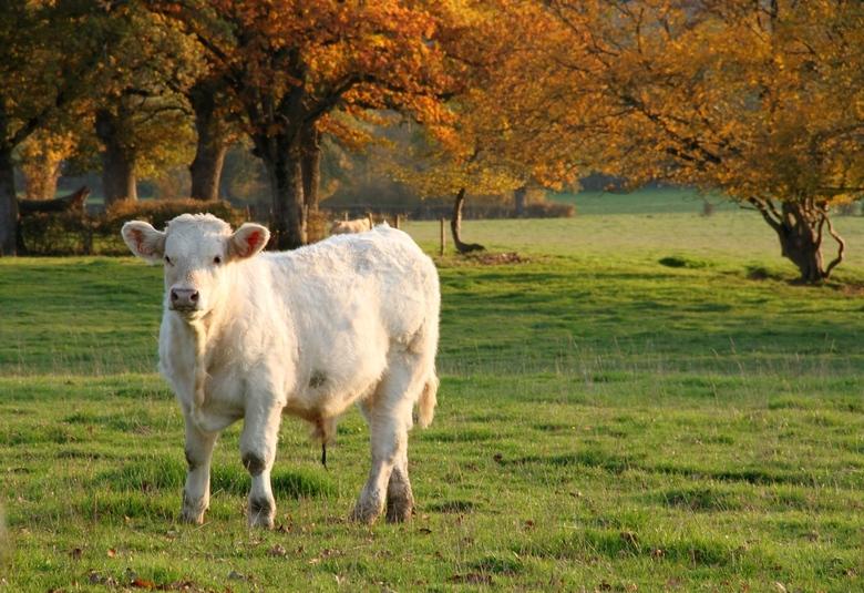 Herfst rond de koeienwei
