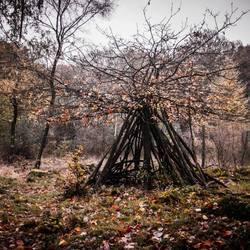 Hut in het Speulderbos