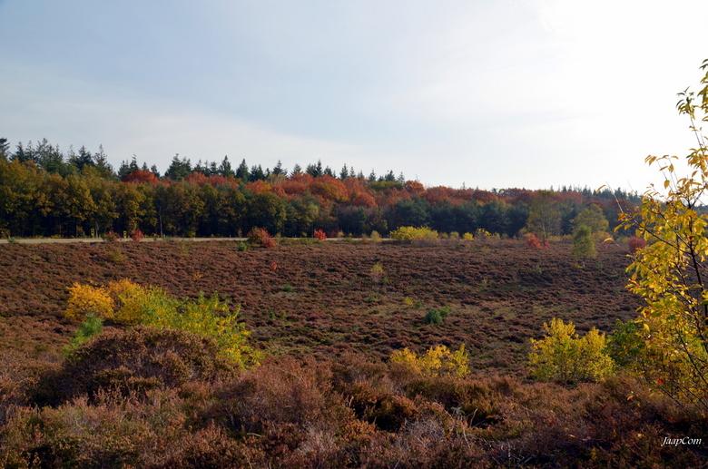 Hattem Autumn - Deze foto genomen vlakbij landgoed molencaten in Hattem