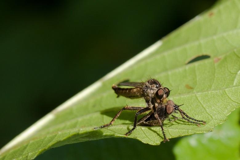 zoomdag - vandaag op bezoek geweest bij Frans en Gea. Veel insecten gespot en alles bij elkaar een leuke en leerzame dag