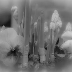 Voorjaar in zwart/wit