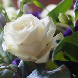 Witte roos in boeket