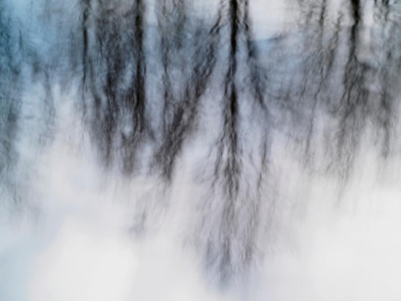 Bewegende bomen in het water.....