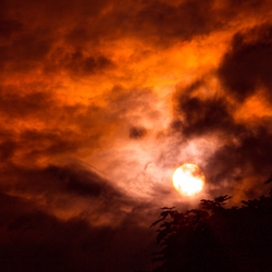 the dark summer sun