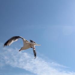 The bird