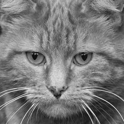 onze kat