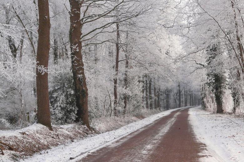 """Sneeuw """"weg"""" - Overal sneeuw en wit behalve op de weg. het bruine van de weg komt mooi terug in de bomen. Al met al vindt ik het ene mooi wi"""