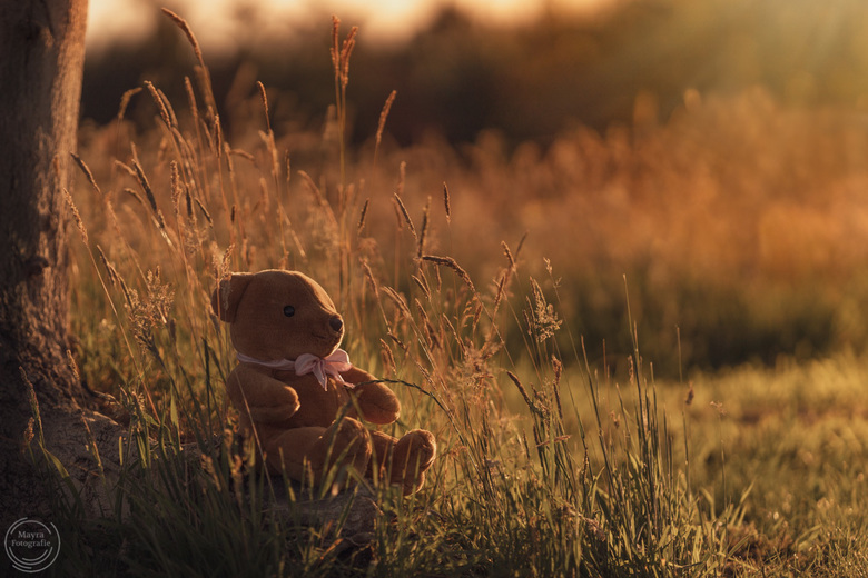 Teddybeer in het gouden zonlicht - Teddybeer in het gouden zonlicht