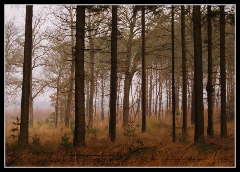 Autumn in the mist... - Afgelopen zaterdag 21 november, heb ik een beginnersworkshop natuur- en landschapsfotografie gevolgd van fotograaf Bas Meelker