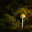 Een lichtpuntje in coronatijd