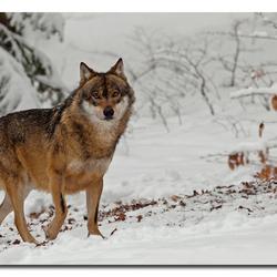Wild dog!