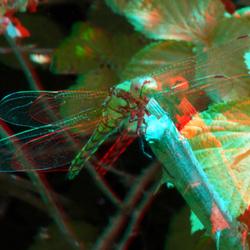 Libellen Nesselande 3D Lumix H-FT012 1mm