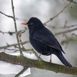 vogels in de tuin 5