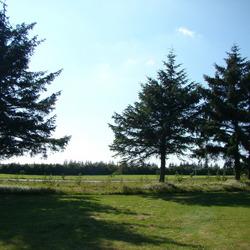 Groepje bomen