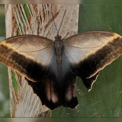 Vlindertuin Berkenhof 4