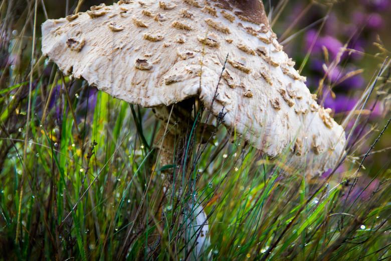 Paddenstoel - Mooie paddenstoel.