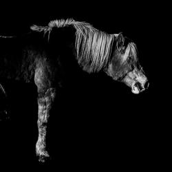 Pony,s