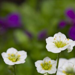 Paarse en witte bloemen