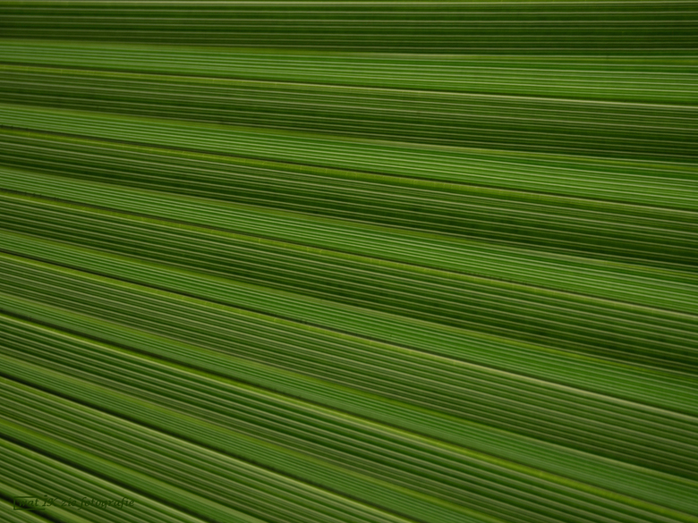 Natural blinds . . . - Deze keer weer een foto in de categorie abstract. Ben heel benieuwd wat jullie, van dit toch enigszins strakke beeld vinden. <b