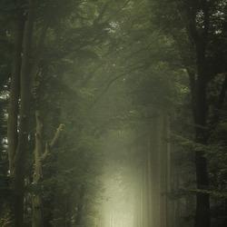 HauntedForest