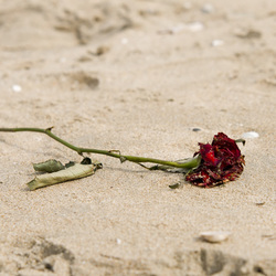 Vergeten op het strand....