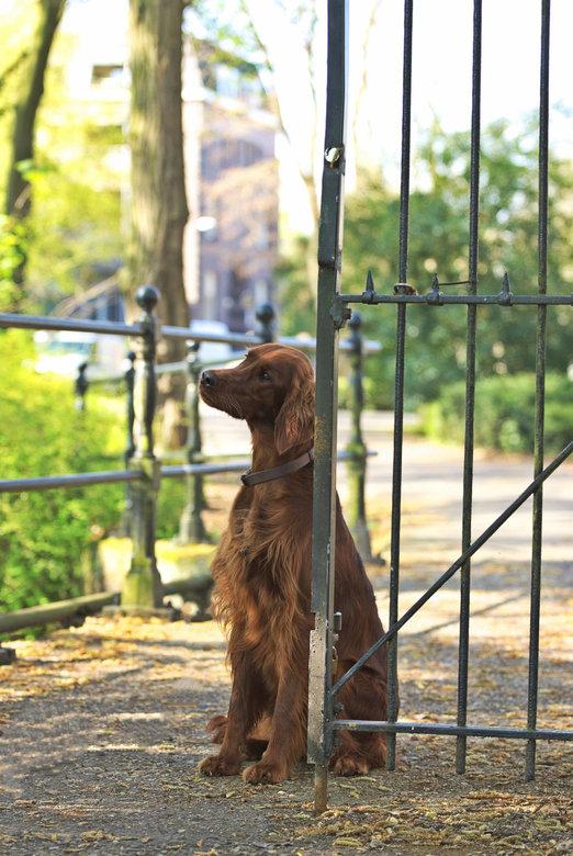 Pretty Setter girl - Setter meisje Giulia, een jongedame vol vuur en energie.<br /> Een hele leuke shoot met baas en hond in 2019<br />