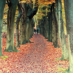 Het enge bos.