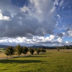 Nieuw - Zeeland 417