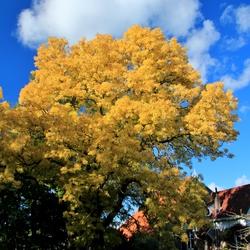 Herfst kleurt de natuur goud