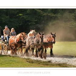 Paardenvierdaagse