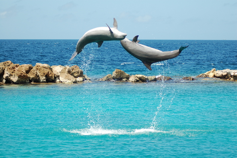 Dolfijnen op Curacao - Genomen tijdens de dolfijnen show