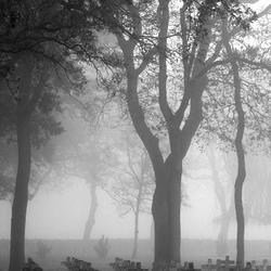 Begraafplaats in de mist (2)