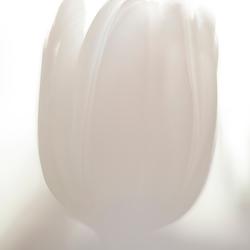 Tulpje 2