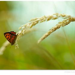 Butterfly Balance