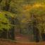 Herfst bospad