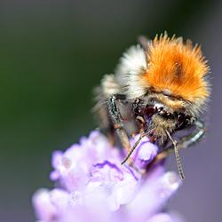 Dit honingpotje is voor mij.