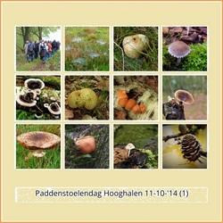paddenstoelendag Hooghalen.jpg