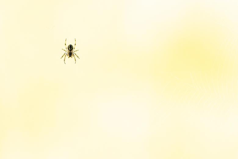 just hanging around - Dit kleine spinnetje hing rustig te wachten in zijn web. De zon was net op maar meteen goed fel. Deze foto is niet bewerkt buite