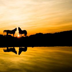 Paarden bij ondergaande zon Hilversum
