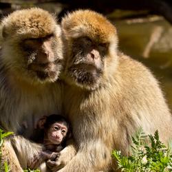 Berberapen gezin