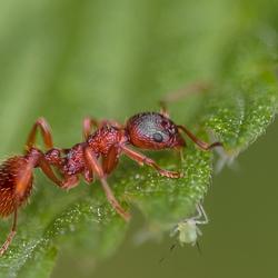.........et la fourmi
