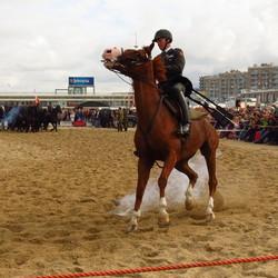 Paard schrikt van Donderslag