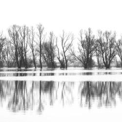 Zwart wit reflecties