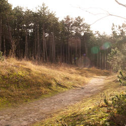 Hoornse Bos, Terschelling