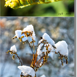 Zomer & Winter