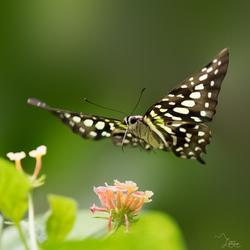 Vliegende bloem